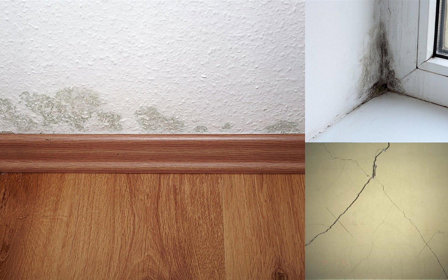 damp, crack and mould in the wall