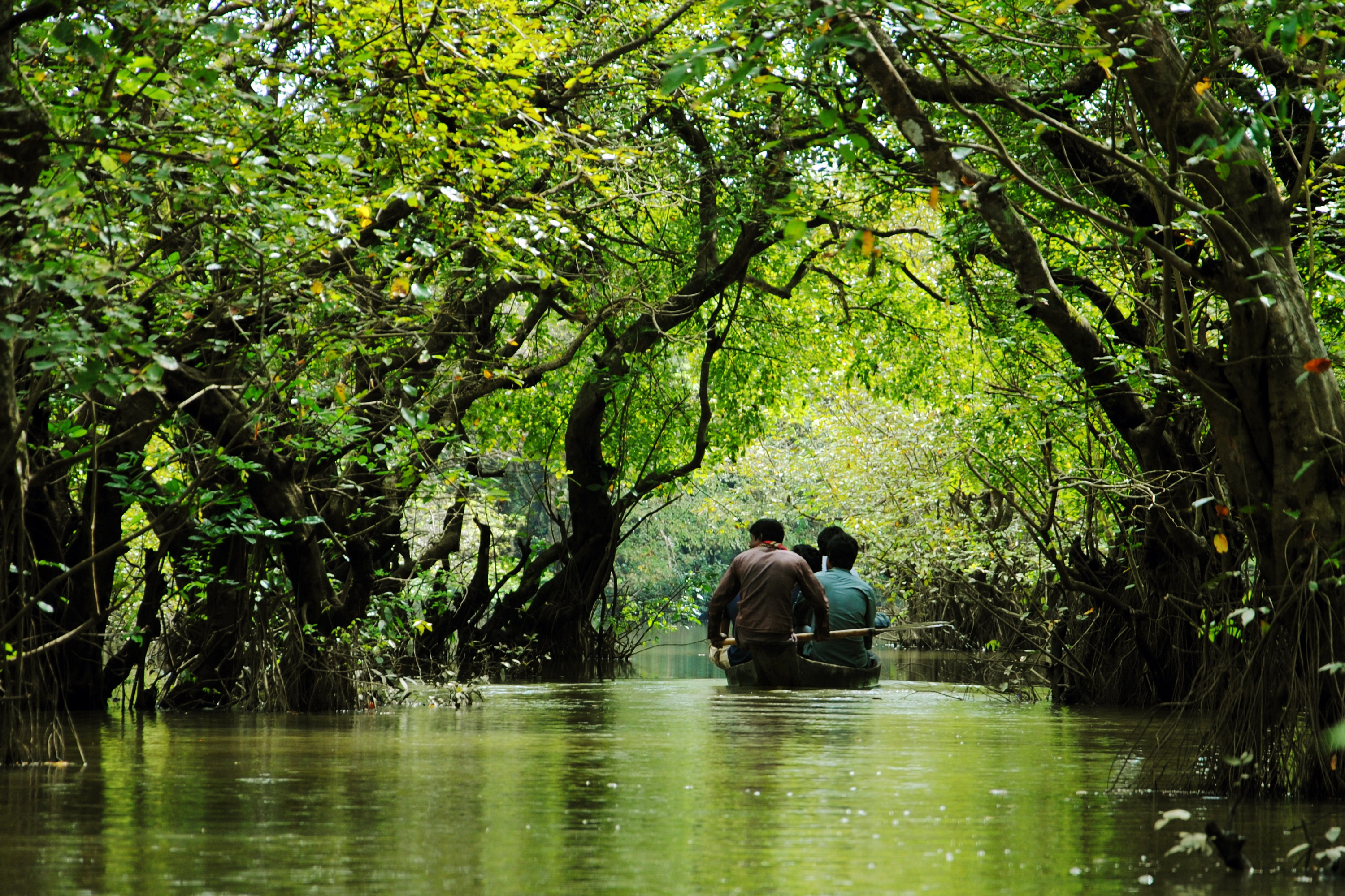 A boat traveling between the trees at Ratargul