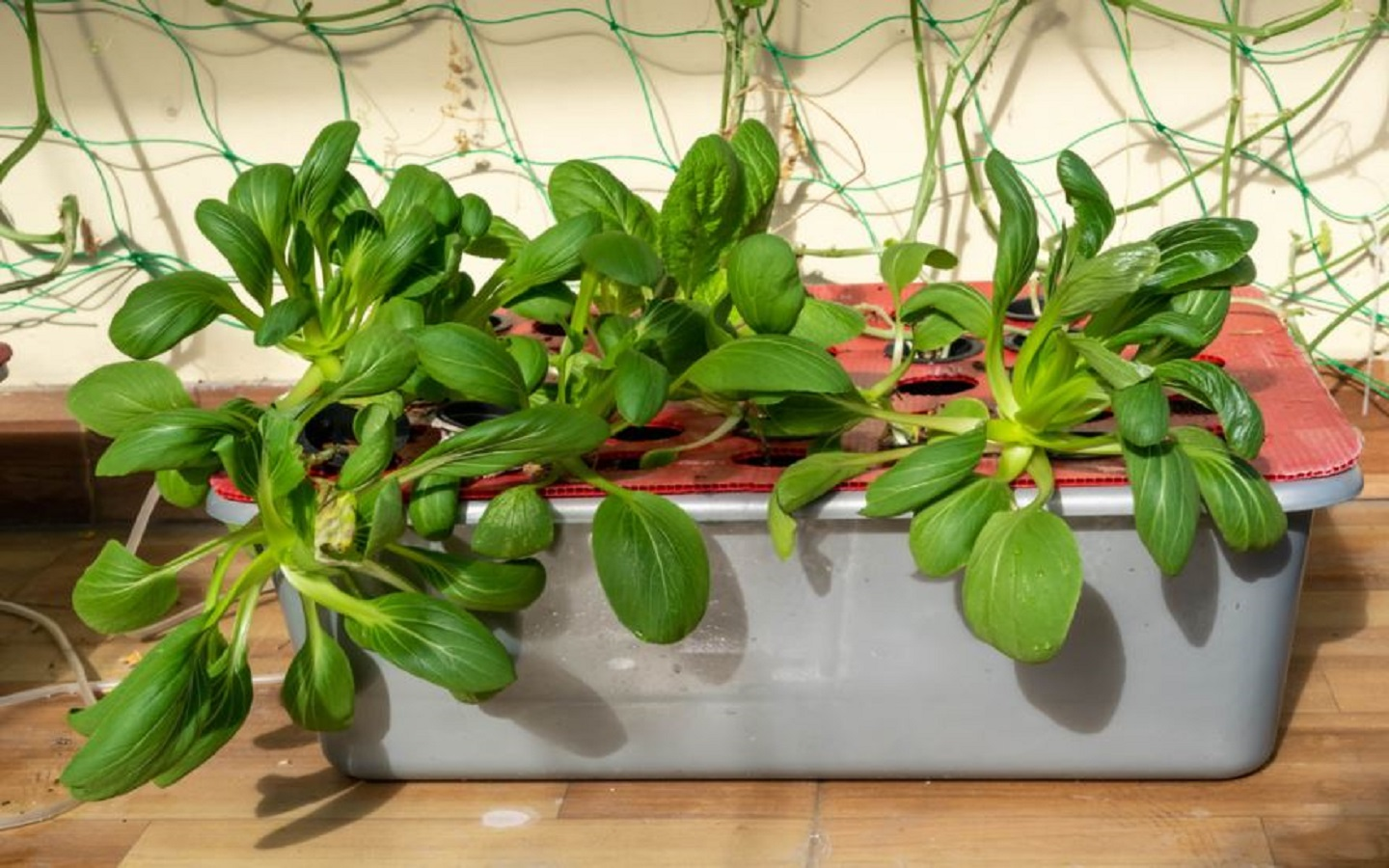Hydroponic plant container