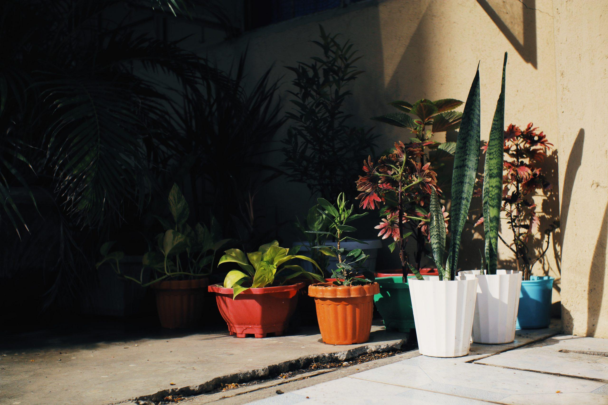Colorful Planter Pots