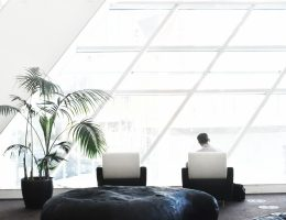 6 Important Benefits of Office Plants - Bproperty