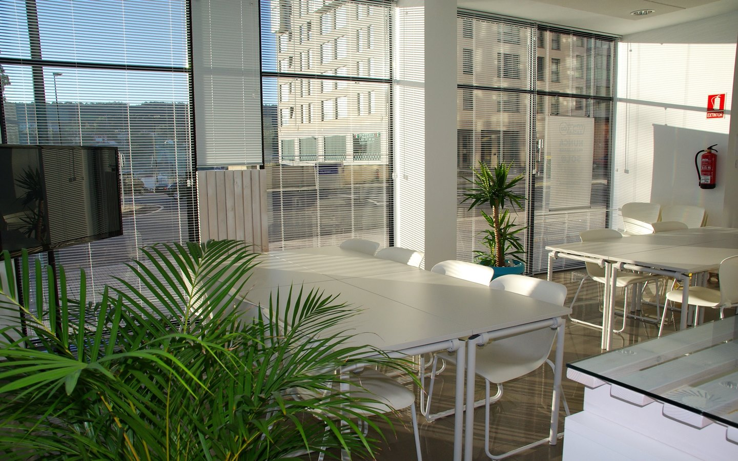 The benefits of office plants become noticeable as spend more and more time sorounded by them