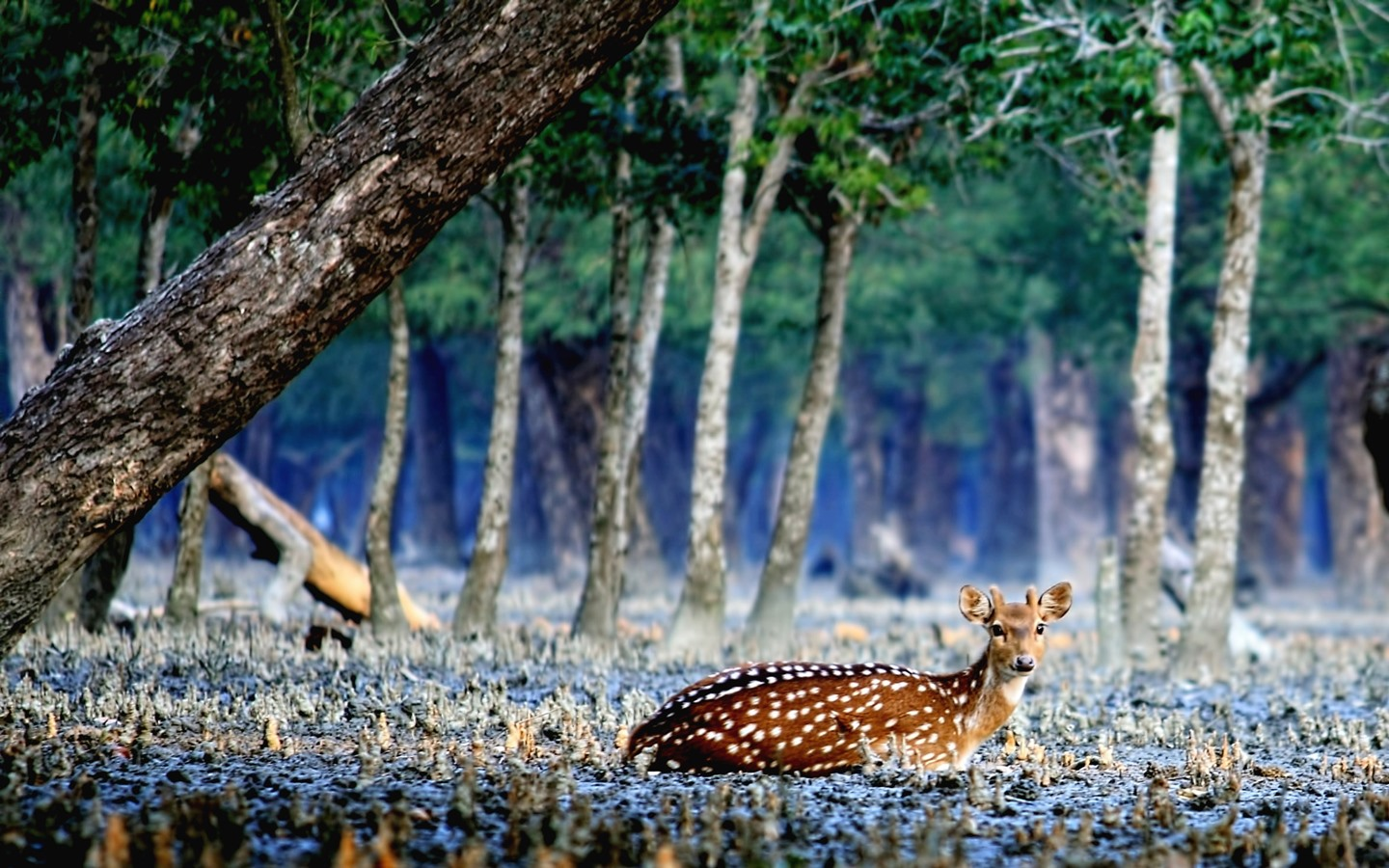The Sundarbans are among the most beautiful places to visit in Bangladesh
