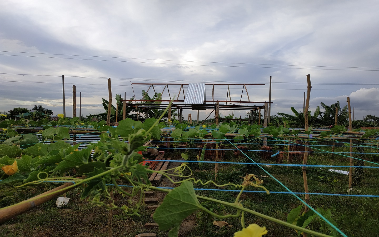 A garden of vegetables