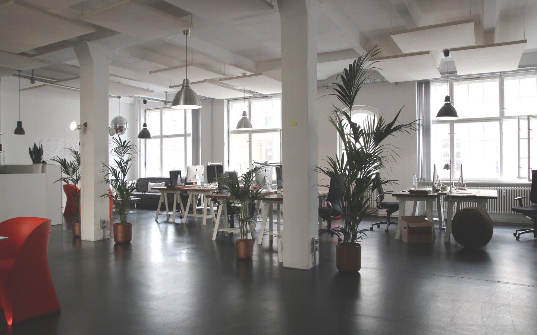 Natural light enhances office decoration