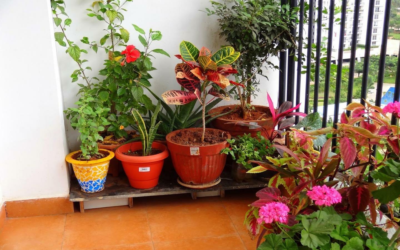 Beautiful Plants sitting in Balcony