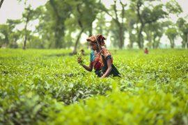 Top 6 Reasons Why I Love Sylhet - Bproperty