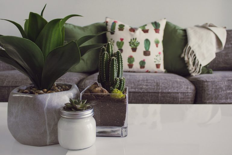 Benefits of Houseplants: Health, Decor & More - Bproperty