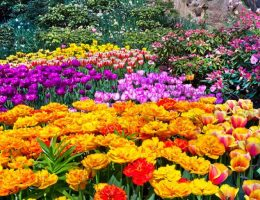 Top 5 Spring Flowers for your Garden - Bproperty