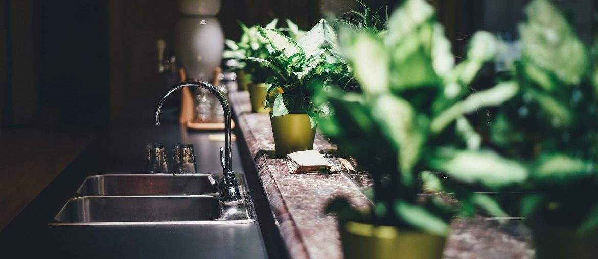 Taking Care of Indoor Plants and Their Varieties - Bproperty