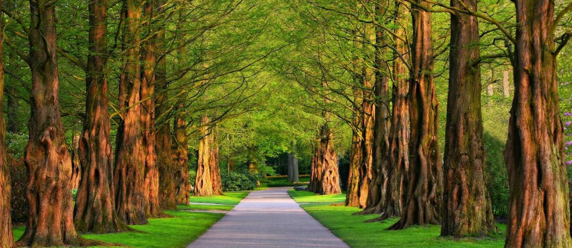 6 Most Famous Parks to visit in Dhaka over the Weekend - Bproperty