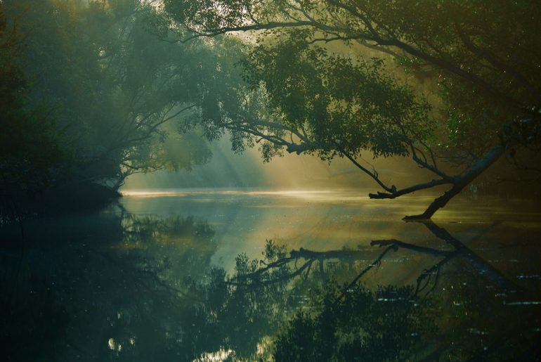 5 Amazing Forests To Visit In Bangladesh - Bproperty