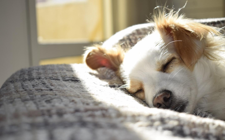 sun on dog