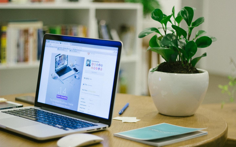 house plant beside a laptop