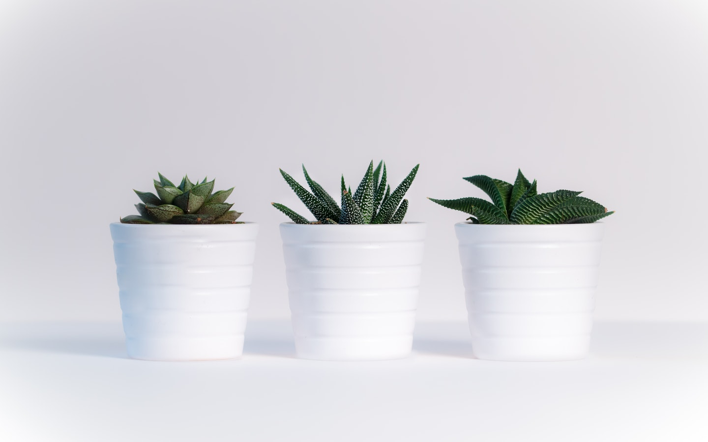 Get the best indoor plants for better air quality