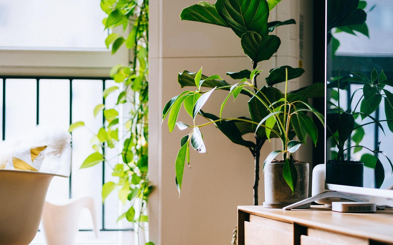 Plants as home decor items