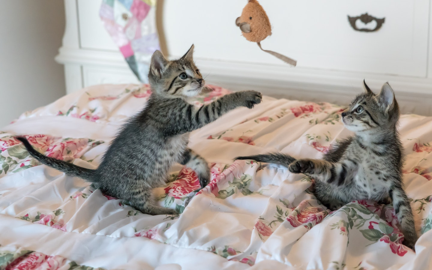 cats playing with toy