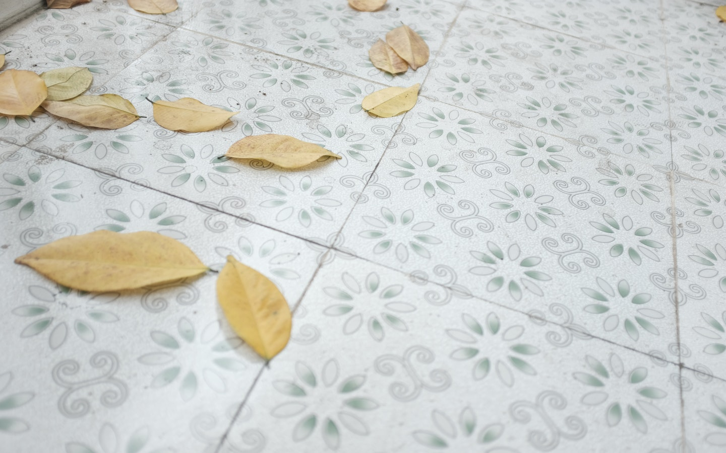 withered-leaves-on-floor